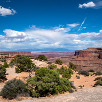 Small Trees and vast Canyon landscape