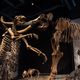 Giant Ground Sloth and Mastadon