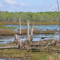 Cranberry Pond landscape with swamp