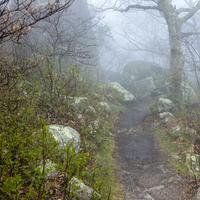 Very Foggy Mountain Path on the Peaks of Otter Trail
