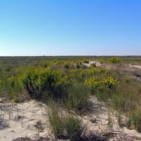 Dunes and Landscape at Fisherman Island National Wildlife Refuge