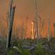 Fire at great dismal swamp refuge
