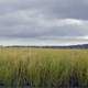Tall Marsh Grasses under thick clouds
