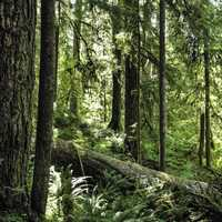Forest at Olympic National Park, Washington