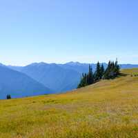Mountain and Meadow in Olympic National Park in Washington