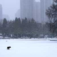 Dog in the snowy city landscape