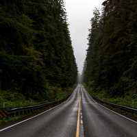 Road Corridor through Olympic National Forest, Washington
