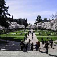 University of Washington Quad in spring in Seattle