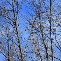Birds in the trees on the 400 trail in Wisconsin