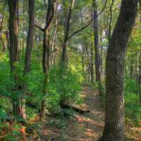 Hiking trail in woods at Belmont Mounds State Park, Wisconsin