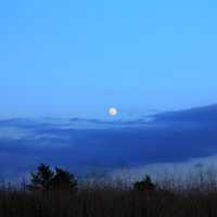 Early night Moon in the Black River Forest