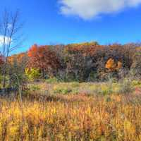 Autumn hills and plants in Blue Mound State Park, Wisconsin