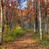 Colorful hiking path through the woods in Blue Mound State Park, Wisconsin