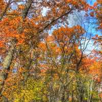 Colorful treetops in Blue Mound State Park, Wisconsin