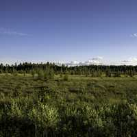 Landscape of trees and grasses in Chequamegon National Forest, Wisconsin