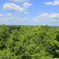 Overview of the forest at Copper Falls State Park, Wisconsin
