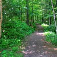 The Forest path at Copper Falls State Park, Wisconsin