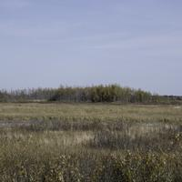 Marsh with Trees in the distance at Crex Meadows
