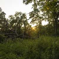 Sunset over the Fallen Trees at Cross Plains State Park