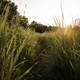 Sunset over the tall grass of the Hiking Trail at Cross Plains State Park