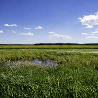 Wide Angle View of George Meade Wildlife Refuge landscape
