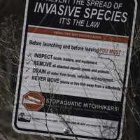 Invasive species sign at Governor Nelson's State Park
