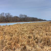 Grasses of the Marsh on the Great River Trail, Wisconsin