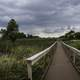 Boardwalk Walkway at Horicon Marsh