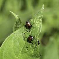 Bugs on a leaf at Horicon Wildlife Refuge