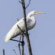 Egret standing on a tree