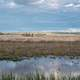 Great Marsh Landscape