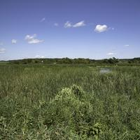 Landscape of the grasses of the Marsh