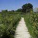 Path trail into the marsh