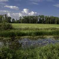Pond landscape with grass and trees at Horicon Marsh