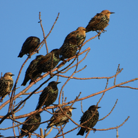 Several Birds in Trees