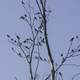 Small Birds on the tree branches