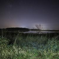 Stars over the tree and pond at night in Horicon Marsh