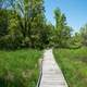 Boardwalk on the trail