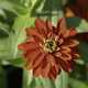 Blooming red flower in full bloom