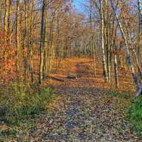 Colorful hiking trail at Kettle Moraine North, Wisconsin