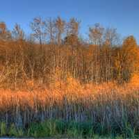 Trees and marsh grasses at Kettle Moraine North, Wisconsin