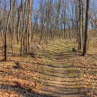 Path through the forest at Kettle Moraine South, Wisconsin