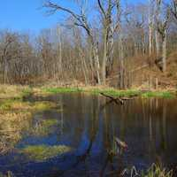 The Swamp at Kettle Moraine South, Wisconsin
