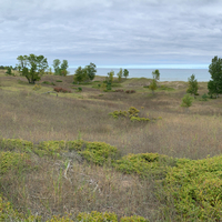 Sand Dunes, Grasses, and Trees by Lake Michigan