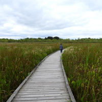 Walkway across the Marsh