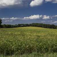 Closeup view of the landscape on the yellow hill crops
