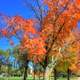 Autumn Trees in Madison, Wisconsin