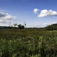 Marsh Grass and landscape under sky at Cherokee Marsh