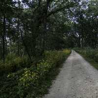 Pathway through the woods at Cherokee Marsh