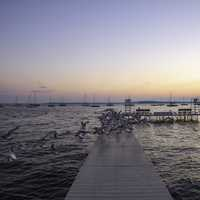 Seagulls taking off from the pier at dawn